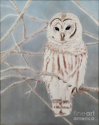 Wall Art - Painting - Barred Owl Contemplation by Carol P Sullivan