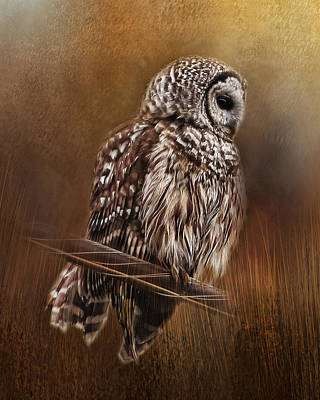 Photograph - Barred Owl by TnBackroadsPhotos