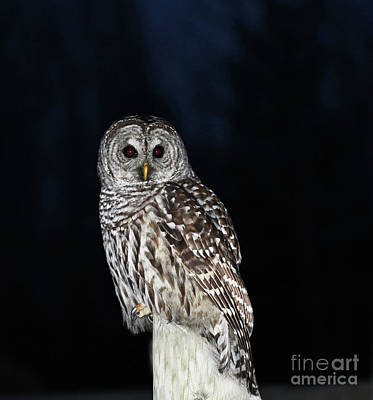 Wall Art - Photograph - Barred Owl by Gary Wing