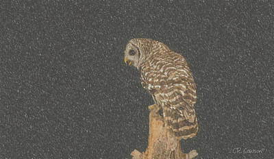 Photograph - Barred Owl In Snowfall by CR Courson