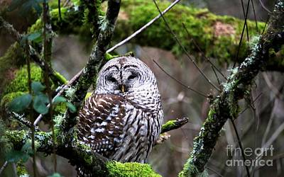 Digital Art - Barred Owl In The Wetlands by Nick Gustafson