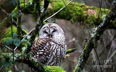 Digital Art - Barred Owl In The Wetlands by Nick Gustafson