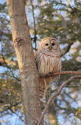 Photograph - Barred Owl by John Burk