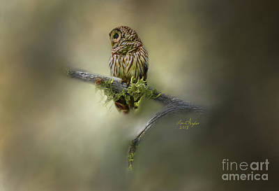 Digital Art - Barred Owl by Lena Auxier