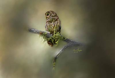 Hoots Digital Art - Barred Owl by Lena Auxier