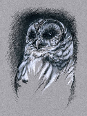 Drawing - Barred Owl by MM Anderson