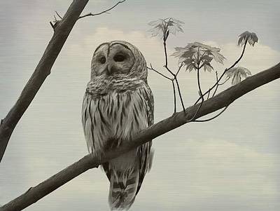 Mixed Media - Barred Owl On A Tree by Dan Sproul
