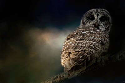 Photograph - Barred Owl On A Winter Night by Jai Johnson