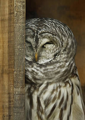 Bird Photograph - Barred Owl by Phill Doherty