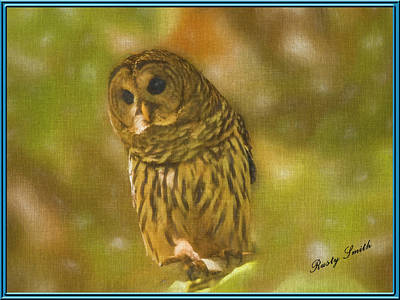 Digital Art - Barred Owl Portrait by Rusty R Smith