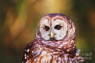 Barred Owl Portrait Art Print