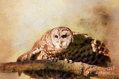 Digital Art - Barred Owl Ready To Fly by Sharon McConnell