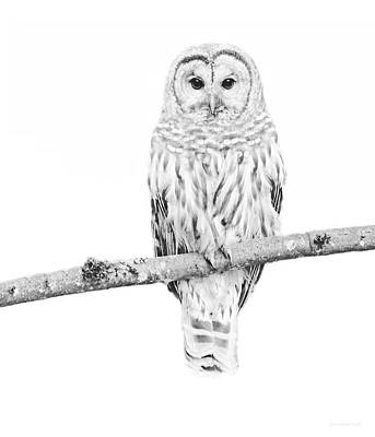 Photograph - Barred Owl Sentry Black And White by Jennie Marie Schell