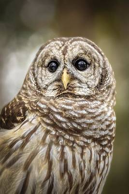 Art Print featuring the photograph Hoot by Steven Sparks