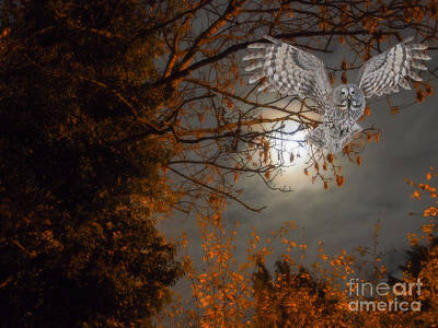 Nikki Vig Royalty-Free and Rights-Managed Images - Great Grey Owl with Moon by Nikki Vig