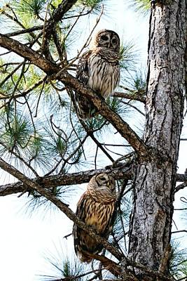 Photograph - Barred Owls by Ira Runyan