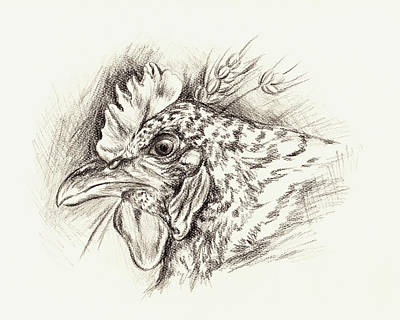 Drawing - Barred Rock Hen With Wheat In Charcoal by MM Anderson