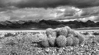 Photograph - Barrel Cactus And The Sheep Range by Robert Melvin