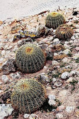 Photograph - Barrel Cactus by Dora Hathazi Mendes