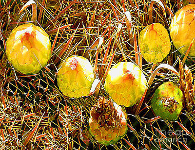 Photograph - Barrel Cactus Fruit by Merton Allen