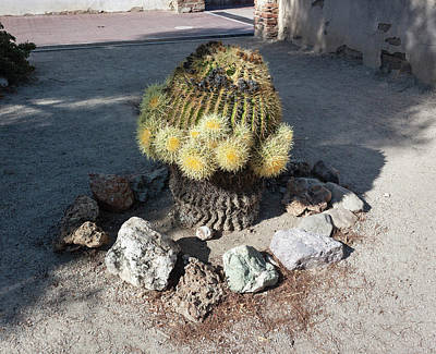 Photograph - Barrel Cactus In Bloom by Suzanne Gaff