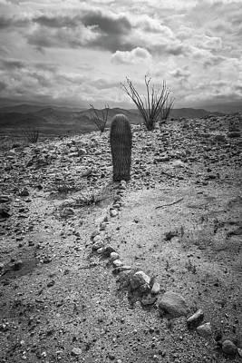 Photograph - Barrel Cactus Mystery by Alexander Kunz