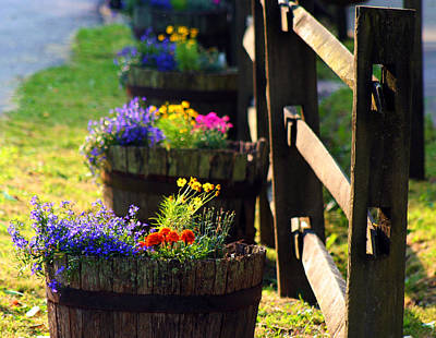 Photograph - Barrel Of Spring by Susie Weaver
