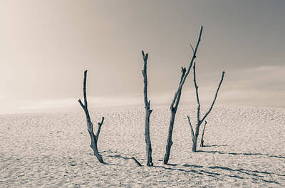 Photograph - Barren by Dan Sproul