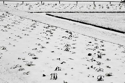 Photograph - Barren Snow by Sophia Pagan