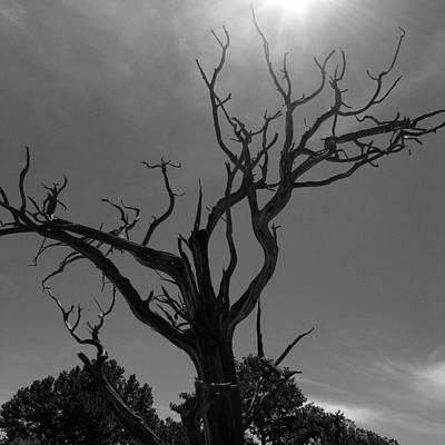 Photograph - Barren Soul by Brendon Bradley