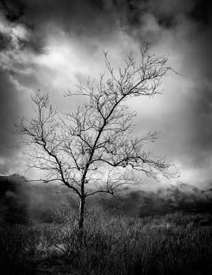 Winter Trees Photograph - Barren Tree 1 by Joseph Smith