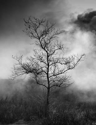 Barren Tree 2 Art Print