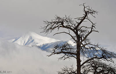 Photograph - Barren Tree And Breaking Clouds by Kevin Munro
