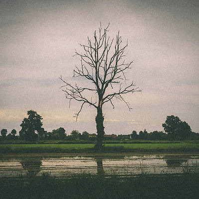 Photograph - Barren Tree In The Winter by Alexandre Rotenberg