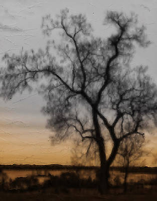 Photograph - Barren Tree by Kathi Isserman