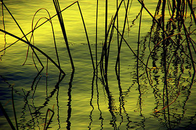 Water And Plants Photograph - Barriers by Susanne Van Hulst