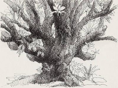 Drawing - Barringtonia Tree by Judith Kunzle