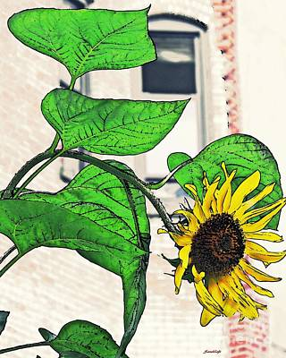 Photograph - Barrio Sunflower by Sarah Loft