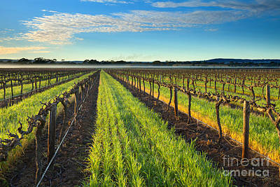 Barrossa Vineyard Sunrise Art Print by Mike Dawson