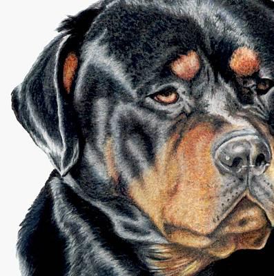 Rottweiler Puppy Drawing - Bart Detail by Kristen Wesch