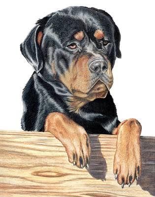 Rottweiler Puppy Drawing - Bart by Kristen Wesch