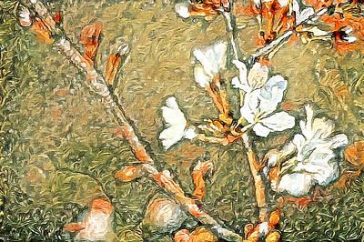 Photograph - Bartlett Pear Spring Blooms by Susan Maxwell Schmidt
