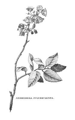 1791 Photograph - Bartram: Illustration by Granger
