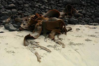 Basalt And Kelp Art Print by Terry Perham
