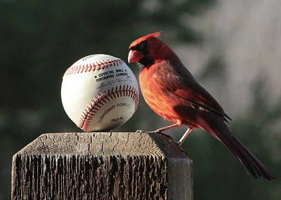 Photograph - Baseball Cardinal by John Freidenberg