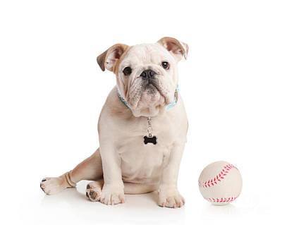 Baseball Pup Art Print