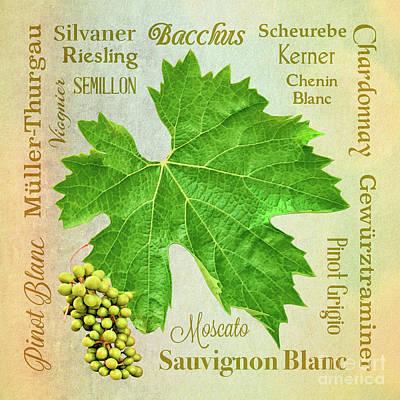 Mixed Media - Basic White Wine Varieties by Gabriele Pomykaj