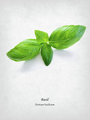 Food And Beverages Photograph - Basil by Mark Rogan