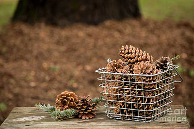 Pine Needle Baskets Photograph - Basket Of Cones by Kelly Ann Jones