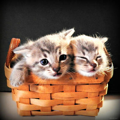 Photograph - Basket Of Fluff by Brenda Conrad